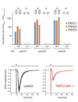 Heteromeric channels formed by TRPC1, TRPC4 and TRPC5 define hippocampal synaptic transmission and working memory