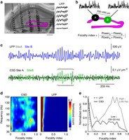 Distance-dependent inhibition supports focality of gamma oscillations.