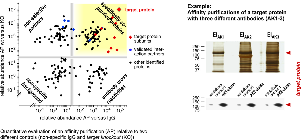 Affinity Purification Quantification and Example
