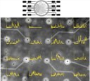 Automated Formation of Lipid Membrane Microarrays for Ionic Single-Molecule Sensing with Protein Nanopores