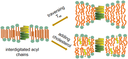 Activity of the Gramicidin A Ion Channel in a Lipid Membrane with Switchable Physical Properties