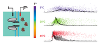 High Temperature Extends the Range of Size Discrimination of Nonionic Polymers by a Biological Nanopore