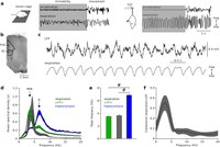 Organization of prefrontal network activity by respiration-related oscillations