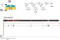 Translocation of Precision Polymers through Biological Nanopores