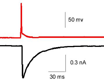 AP-EPSC Trace